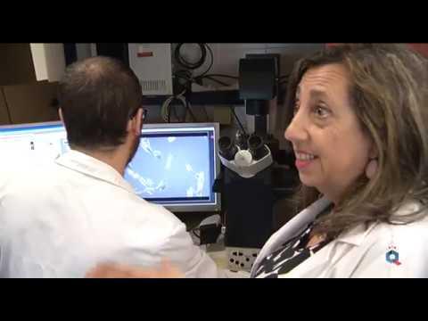 Resveratrol, como neuroprotector frente a la enfermedad de Alzheimer. UCLM