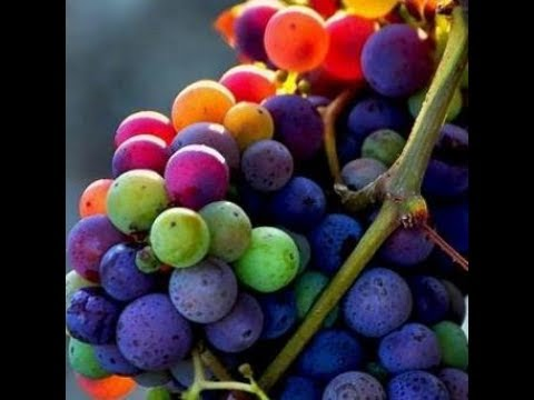 Resveratrol and why you should take it