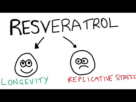 Resveratrol induces replicative stress…what does this mean?