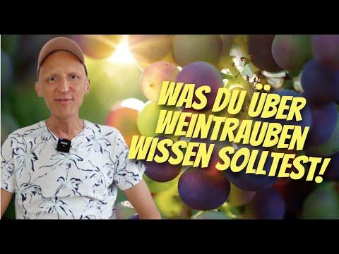 Geheimtipp Weintrauben … OPC Resveratrol Traubenkur … Wie gesund sind Weintrauben?